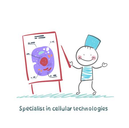 Specialist in cellular technologies speaks cells Zdjęcie Seryjne - 24126003