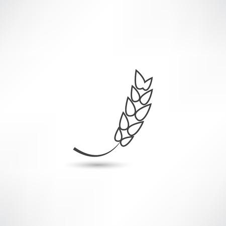 ear of corn: spica icon
