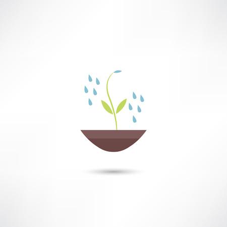 regando plantas: Plantas de riego icono Vectores