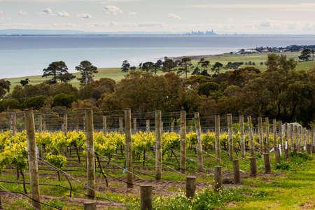 View over a vineyard on the Bellarine Peninsula towards Melbourne, Victoria, Australia