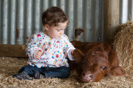 pat: An infant pats a calf at a farm Stock Photo