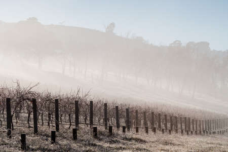 shrouds: Fog shrouds vines on a cold winter