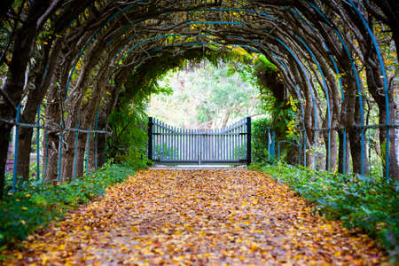 A walking path in Tilba Tilba on an autumn afternoon in New South Wales, Australia