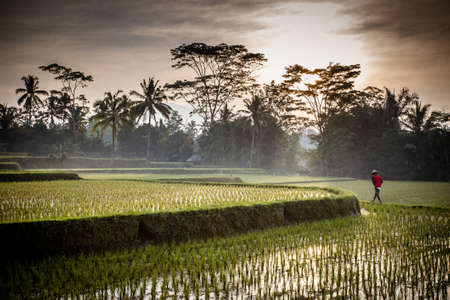 A Balinese rice farmer goes to work early in the morning near Ubud, Bali, Indonesia. Banque d'images