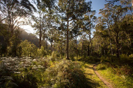 bushwalk: The base of the epic walking and biking track called Delatite River Trail near Mirimbah, Mt Buller in Victoria, Australia Stock Photo