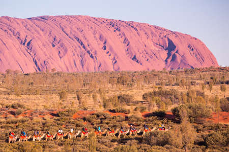 uluru: Majestic Uluru and a camel tour on a clear winters evening sunset in the Northern Territory, Australia