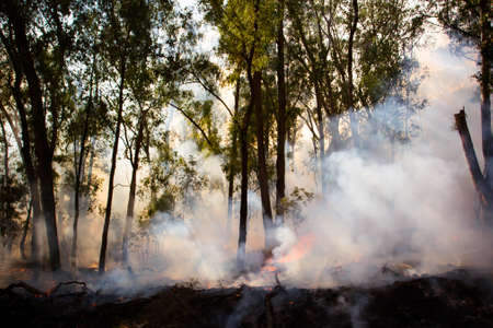 occurs: A controlled fire burn occurs near Whitfield in the King Valley, Victoria, Australia Stock Photo