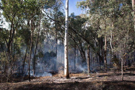 controlled: A controlled fire burn occurs near Whitfield in the King Valley, Victoria, Australia Stock Photo