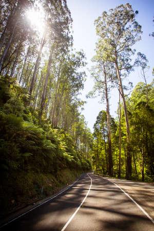 spur: The Black Spur after Black Saturday bushfires near Healesville, Victoria, Australia Stock Photo