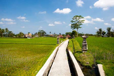 The famous Campuhan Ridge Walk in Ubud, Bali, Indonesia 版權商用圖片