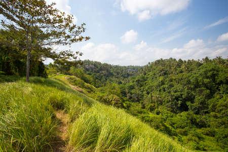 ubud: The famous Campuhan Ridge Walk in Ubud, Bali, Indonesia Stock Photo