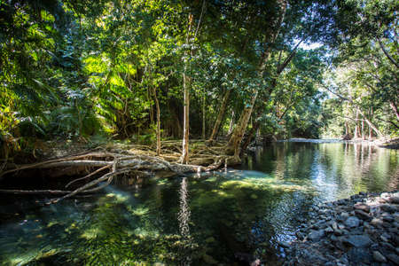 daintree: A creek nth of Cape Tribulation in the Daintree region of Queensland, Australia
