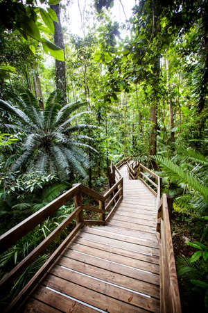 The famous Jindalba Boardwalk thru ancient rainforest in the Daintree region of Queensland, Australia Stock Photo