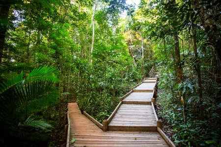 thru: The famous Jindalba Boardwalk thru ancient rainforest in the Daintree region of Queensland, Australia Stock Photo