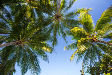 qld: Tropical palm trees in Palm Cove, Queensland, Australia