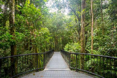 thru: Footpath thru dense rainforest in Mossman Gorge, Queensland, Australia