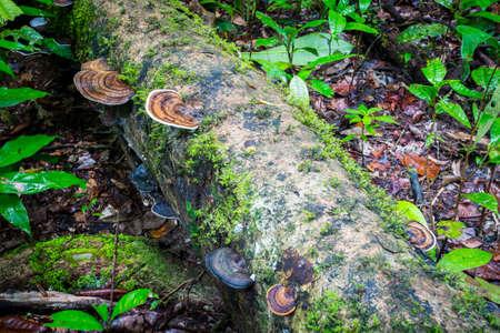 fungi: Dense rainforest and fungi in Mossman Gorge, Queensland, Australia Stock Photo