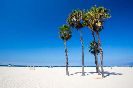 santa monica: A typical beach view with palm trees in Santa Monica, California, USA Stock Photo