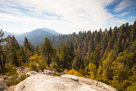 sequoia: Sequoia National Park Lookout