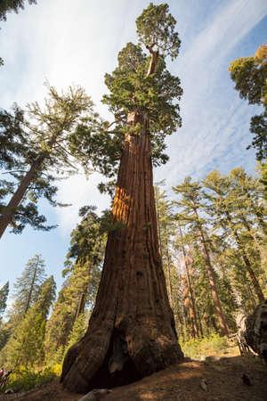 grant: General Grant Tree Stock Photo