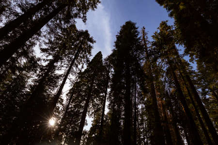largest tree: Giant Forest Sequoia National Park Stock Photo
