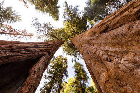 Giant Forest Sequoia National Park Stock Photo
