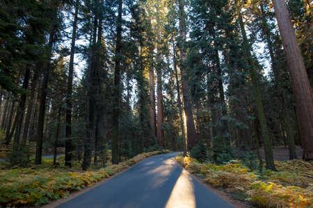 Sequoia National Park at Sunrise Stock Photo