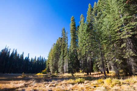 sequoia: Crescent Meadow Picnic Area