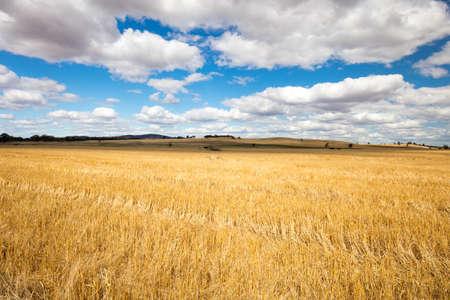 Maldon やビクトリア、オーストラリアの金鉱地キャッスルメインの古い町の近くの Moolort 平原で農業分野の広大な広がり