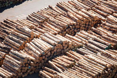 Piles of logs from New Zealands timber industry ready to be exported from the Port of Napier. Banco de Imagens
