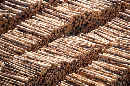 Piles of logs from New Zealands timber industry ready to be exported from the Port of Napier. Stock Photo