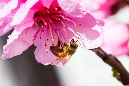Australian Bee and Flower Фото со стока - 102223858