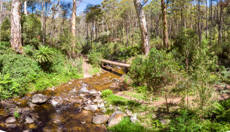 Delatite River Trail at Mt Buller Stock Photo