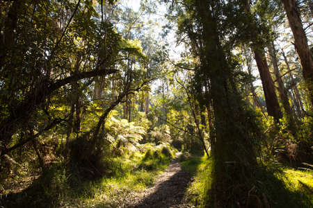 Sherbrooke Forest near Melbourne Australia Stock Photo