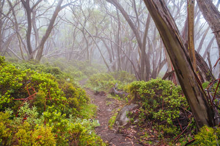 Mt Baw Baw Walking Trails in Summer in Australia