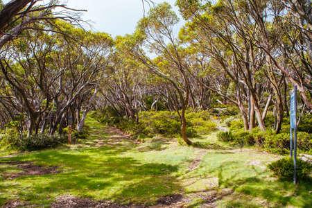 Mt Baw Baw Walking Trails in Summer in Australia