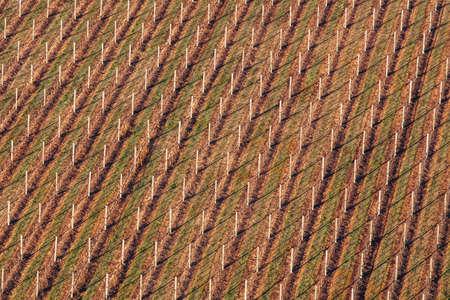 Aerial View of a Vineyard in Australia Reklamní fotografie