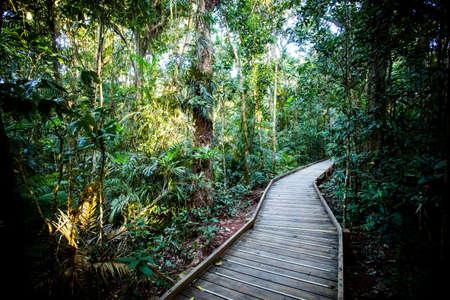 The Daintree Jindalba Boardwalk in Australia