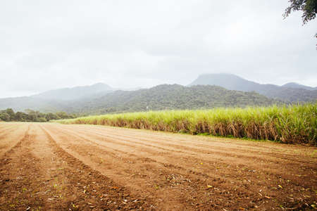 Australian Sugarcane Fields and Landscape