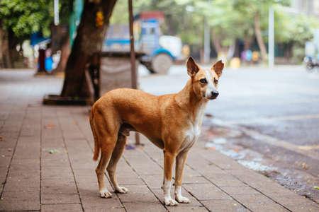 Stray Dog in Mumbai India