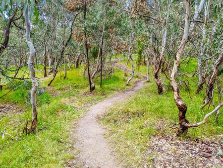 Australian Bush and Walking Path