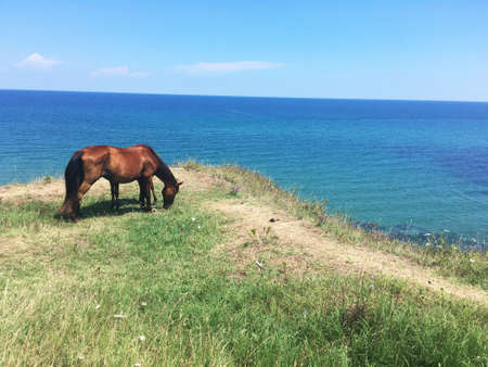 A brown horse grazing on a hill with the Bulgarian Black Sea