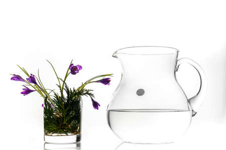A large glass jug with pure water on a white background and a glass for whiskey of bunch fresh spring violet flowers with oned petals in the water