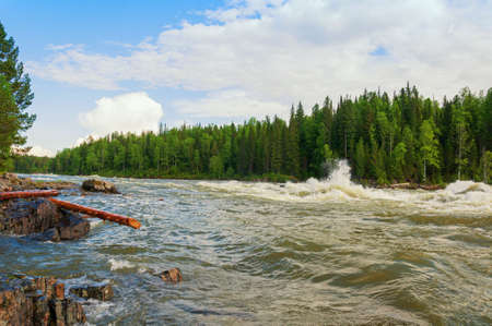 Riffle of raging torrent of wild siberian river racing through a wooded valley, splashing from waves beating violently against stones on a sunny summer day