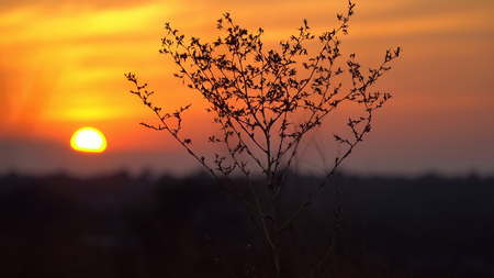 Contour dry bush at sunset. Dry branch in the desert against the setting sun