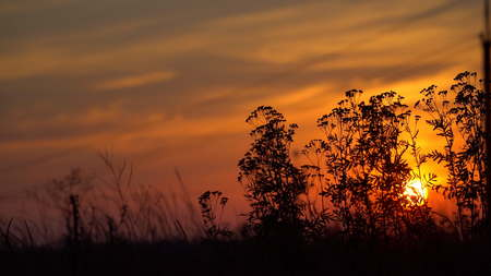 Dried wildflowers on the background of the setting sun. Sunset in the steppe Stock Photo