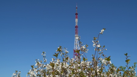 A television tower against the blue sky. In the foreground there is a flowering tree