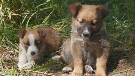 Two of the homeless puppy sit on the ground 写真素材