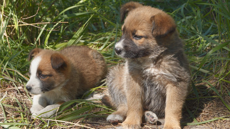 Homeless puppies are sitting on the ground. Animals 写真素材