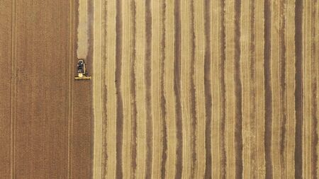Aerial view on the combine working on the large wheat field. Harvester on the wheat field. 写真素材